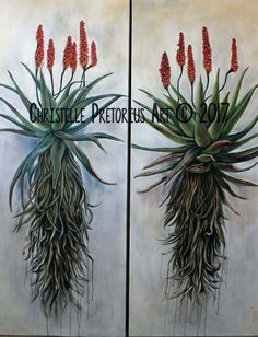 Christelle Pretorius Art, oil on canvas, Aloes Protea Art, Cactus Painting, Plant Painting, Gouache Painting, Botanical Drawings, Botanical Art, Art Floral, List Of Paintings, Oil Paintings