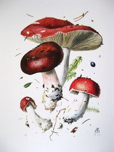 Фотографии БРУСНИКА ***творчество со вкусом*** | 27 альбомов Illustration Blume, Nature Illustration, Watercolor Illustration, Watercolor Art, Botanical Drawings, Botanical Prints, Mushroom Art, Fruit Painting, Nature Drawing