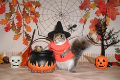 037_Sugar_Bush_stirs_up_trouble_on_Halloween.jpg