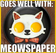 horrible cat pun with eggs