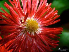 awesome Fotografie »o. T. 07 @ Flowers«,  #Blumen