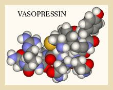 VASOPRESSIN molecule...binds the nuclear family along with Oxytocin, located in the Pituitary Gland..