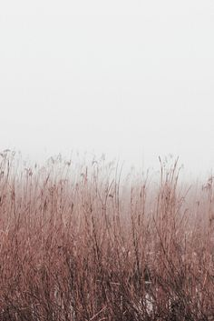 plants in foggy fields Beautiful World, Beautiful Places, Landscape Photography, Nature Photography, Foggy Morning, The Great Outdoors, Mother Nature, Mists, Scenery