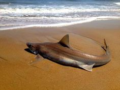 Beachgoer drags shark back into water in Rehoboth