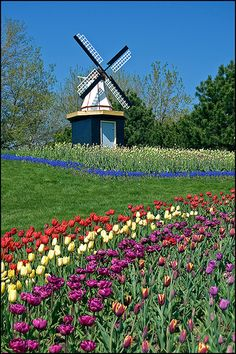 Tulip Time Holland Michigan