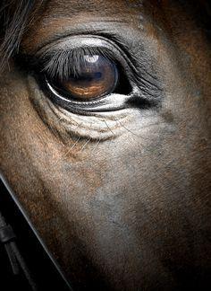 #Le cheval fantôme