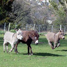 donkeys | Flying donkeys | The Donkey Sanctuary