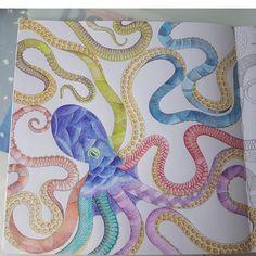Octopus from Millie Marotta Animal kingdom. Testing out derwent inktense