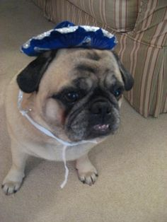 15 Dogs Reluctantly Celebrating Cinco De Mayo