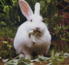 Greedy bunny white rabbit printed on canvas paper