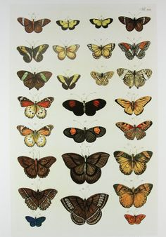 butterflies illustations