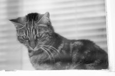 My Photos, Cats, Animals, Gatos, Animales, Animaux, Kitty, Cat, Cats And Kittens