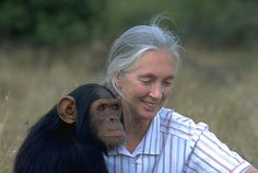 Jane Goodall a British primatologist, ethologist, anthropologist, and UN Messenger of Peace.[2] Considered to be the world's foremost expert on chimpanzees, Goodall is best known for her 45-year study of social and family interactions of wild chimpanzees in Gombe Stream National Park, Tanzania.[3] She is the founder of the Jane Goodall Institute and has worked extensively on conservation and animal welfare issues.