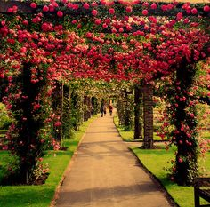to walk through this beautiful floral garden...♥