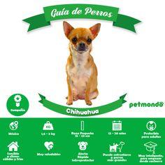 16 Ideas De Guía De Perros Petmondo Perros Razas De Perros Perro San Bernardo