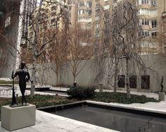 Garden @ MoMA.
