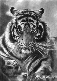 Tiger by kadiliis
