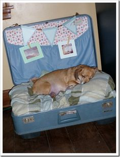 Dog Bed Fit for a Queen…