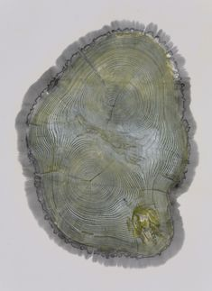 Cross-section tree print by #CCArts alum Bryan Nash Gill