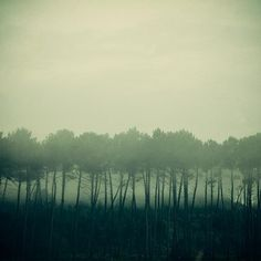 Tree Art Print, Foggy Morning, Misty, Mysterious, Autumn, Fall, Emerald Green Landscape Photograph - Shadows and tall trees