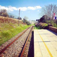 Oggi vi raccontiamo la Giornata Nazionale delle Ferrovie dimenticate, una maratona sul treno Salento Express fino alla fermata ferroviaria di Gallipoli Porto con a bordo personalità del mondo accademico, esperti del settore turistico ferroviario e rappresentanti delle istituzioni. Guarda il video http://www.salentoweb.tv/video/9363/giornata-nazionale-delle-ferrovie