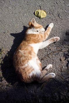 Cat Cat, Cats, Corgi, Wordpress, Animals, Blog, Pet Dogs, Animales, Gatos