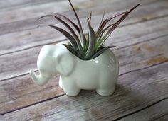 Elephant Planter, Elephant Air Plant Holder.  Tiny ceramic elephant, perfect for an air plant or little succulent.  Handmade Elephant by BoulderDesign on Etsy https://www.etsy.com/listing/81536514/elephant-planter-elephant-air-plant