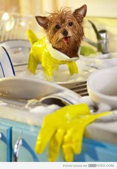 Chubasquero para perro pequeño con un guante para lavar los platos / dish glove as overall / life hacks #trucos