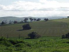 Wayne Miles Cowra Landscape (off Kangaroo Flat Rd (40))
