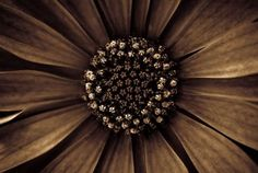 flower in brown - nature, flower, brown, photography