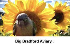 Conure, Parrot, Bird, Animals, Parrot Bird, Animales, Animaux, Parrots, Animais
