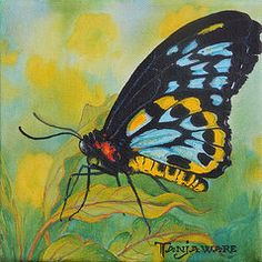 Insect Paintings - Black Beauty by Tanja Ware
