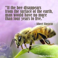 Bees help pollinate around 70% of all the crops on the planet. If all the bees die & nothing rises to replace them (another type of insect, for example, or serious human intervention), many plants will simply die-off due to lack of pollination. If 70% of the plants on the plan disappear, then this would lead to the disappearance of certain animal species. . . including mankind.