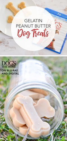 With only 3 ingredients, this easy jiggly gelatin dog treat recipe is sure to be a hit with your pet! The no-bake homemade treats come together in minutes! Home Made Dog Treats Recipe, No Bake Dog Treats, Dog Cookie Recipes, Easy Dog Treat Recipes, Homemade Dog Cookies, Dog Biscuit Recipes, Peanut Butter Dog Treats, Diy Dog Treats, Homemade Dog Food
