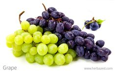 Grape vine is one of the most identifiable plants in the world. Read on to learn why it has been a staple of human health and happiness for centuries. Grape Nutrition, Fruit Nutrition Facts, Grape Plant, Grape Seed Extract, Red Grapes, Grape Juice, Natural Lifestyle, Herbal Medicine, Herbal Remedies
