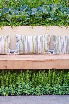 Garden bench with pillows placed over fragrant herbs rosemary Rosmarinus and Marjorum, and using vertical gardening raised bed at top for vegetable cabbage