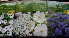 Selätön puutarhuri: Taimikasvatus, siemenet ym. Seeds are growing