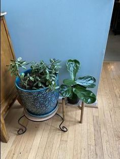 MUST I repot my Jade? Succulent Gardening, Succulent Care, Succulents Garden, Container Gardening, Common House Plants, Types Of Succulents, Drought Tolerant Plants, Outdoor Plants, Low Lights