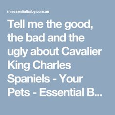 Tell me the good, the bad and the ugly about Cavalier King Charles Spaniels - Your Pets - Essential Baby