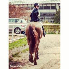 Instagram photo by marcelinamatyszczak - Rude szczęście ❤️ #horses #horse #horsesofinstagram #TagsForLikes #horseshow #horseshoe #horses_of_instagram #horsestagram #instahorses #wild #mane #instagood #grass #field #farm #nature #pony #ponies #ilovemyhorse #babyhorse #beautiful #pretty #photooftheday #gallop #jockey #rider #riders #riding fot.Gloria Ciba