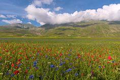 A flowering carpet - null