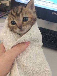 Awwww! Baby kitty burito!