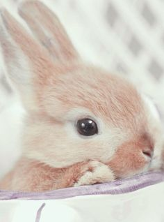 Bunny my baby Cute Baby Animals List Cute Creatures, Beautiful Creatures, Animals Beautiful, Beautiful Things, Cute Baby Animals, Animals And Pets, Funny Animals, Baby Bunnies, Cute Bunny
