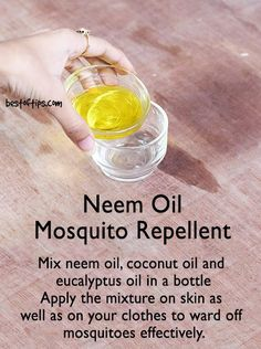 Having mosquitoes around can be irritating as well as dangerous. After all mosquitoes are actively involved in the transmission of diseases like dengue malaria and Japanese encephalitis. So it is important to keep mosquitoes away. Mosquito Spray, Natural Mosquito Repellant, Japanese Encephalitis, Bug Spray Recipe, Eucalyptus Oil, Neem Oil, Ayurvedic Medicine, Oil Benefits, Oil Uses