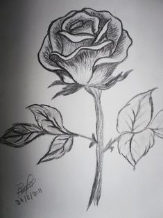 coloring pages - Collection Of Rose Flower Drawing Sketch High Quality, Free Rose Flower Sketch Images Flower Sketch Images, Rose Flower Sketch, Pencil Sketch Images, Flower Sketch Pencil, Pencil Drawings Of Flowers, Flower Sketches, Pencil Drawing Tutorials, Drawing Sketches, Flower Art