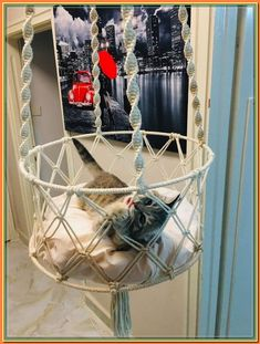 (paid link) Cat, Kitten or little Pet Hammock. * Attaches quickly and easily to any cage following the included spring clips. * These comfy cage hammocks are a must-have for ... #cathammock