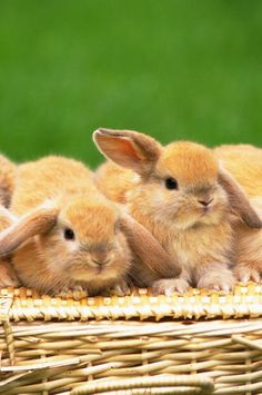 """""""My greatest fear is that I will be attacked by bunnies and not have enough love for all of them."""" Logan Quote"""