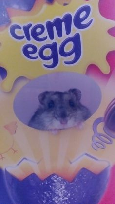 Cute hamster in an easter egg  box!