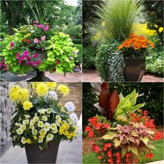 24 stunning container garden designs with plant list for each and lots of inspirations! Learn the designer secrets to these beautiful planting recipes. - A Piece Of Rainbow