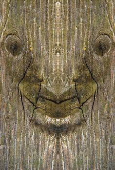 Des créatures dans des troncs darbres des creatures dans des troncs d arbres elido turco 8